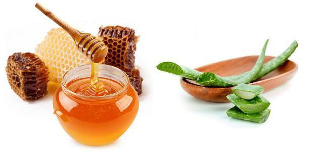 Алоэ при гастрите: полезные свойства растения для лечения желудка, рецепты из смеси сока с медом и другими ингредиентами, а также советы, как принимать эти средства