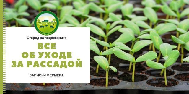 Как выращивать редиску в домашних условиях: можно ли сажать семена зимой и как ухаживать за рассадой в квартире, а также выбор места и сорта, болезни и вредители
