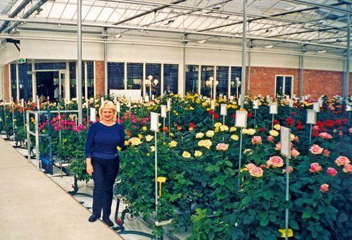 Голландские розы: характеристика и описание видов и сортов с фото и названиями, нюансы выращивания этих цветов