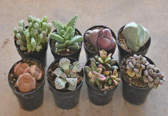 Грунт для кактусов: какой состав земли нужен, как сделать почву своими руками в домашних условиях, чтобы сажать растения, покупной субстрат, подходящий суккулентам