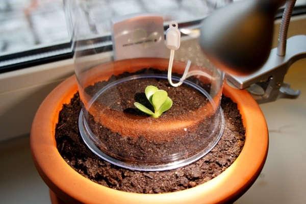 Как посадить отросток денежного дерева правильно: фото, размножение толстянки в домашних условиях черенками, без корней, в воде, в какой горшок определить крассулу?