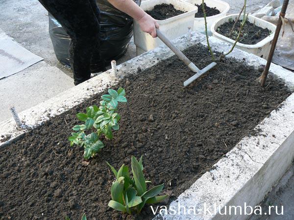 Грунт для гардении, предпочтительная почва для растения, удобрение для земли, выбор горшка, а также как правильно поливать цветок
