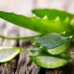 Алоэ при простатите: чем так полезно это растение для мужчин и какие существуют способы применения лечебных свойств для улучшения потенции?