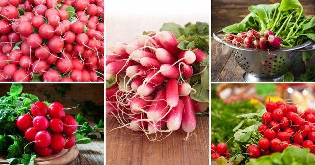 Лучшие сорта редиса для Сибири: какие виды будут хорошими для выращивания семенами в открытом грунте, в теплице, дома?