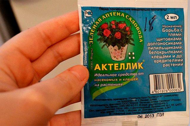 Мучнистый червец на комнатных растениях: как бороться с насекомым при помощи химических и народных средств, чтобы избавиться от него, нужна ли обработка земли?