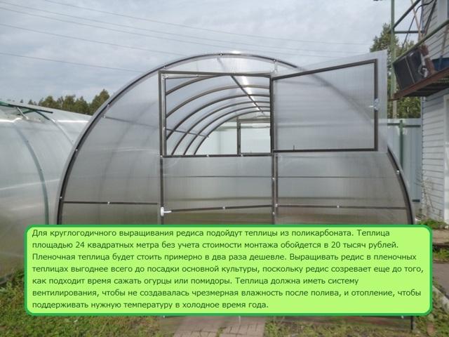 Выращивание редиса в теплице, в том числе зимой на продажу: как правильно сажать семена, какой уход нужен посевам, как часто поливать, почему сильно вытягивается?