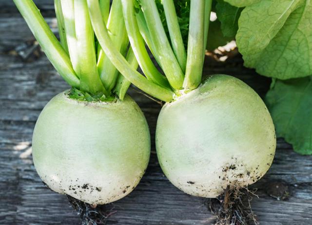 Зеленая редька: что это такое, как еще называется, чем вид отличается от черного, как выращивать корнеплод, а также польза и вред, названия и описание сортов, фото