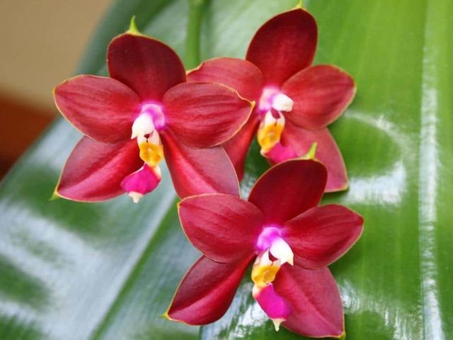 Удобрение для орхидей:  можно ли приготовить своими руками и как правильно нужно подкормить цветок; инструкция по составу и частоте употребления