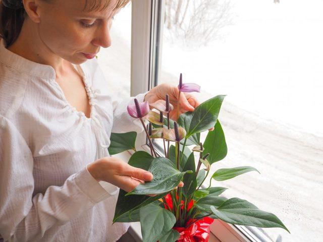 Почему на орхидее липкие капли на листьях: причины этого явления на цветоносе и на стволе, как избавиться от белого налета и от чего он бывает?
