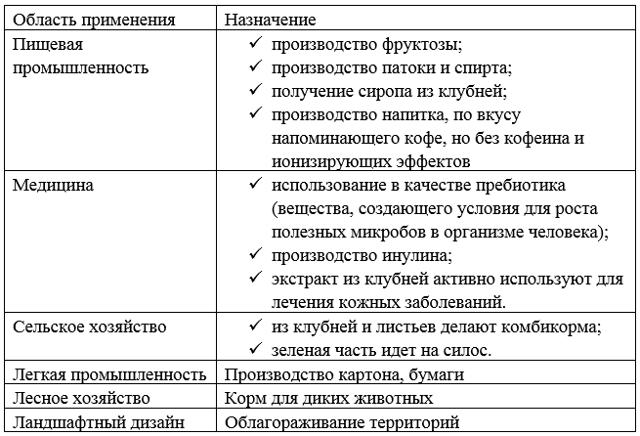 Инструкция по применению топинамбура в таблетках, названия препаратов, которые продаются в аптеке, лечебные свойства, польза инулина из клубней при сахарном диабете