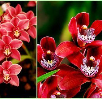 Необычные орхидеи: сорта, описание и фото цветов разной формы