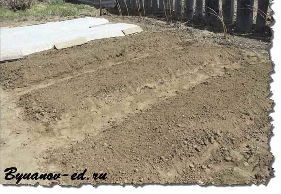 Посадка редиса: схема и глубина посева семян в открытый грунт и уход на огороде, и при какой температуре можно сажать в землю, как правильно, чтобы не прореживать?