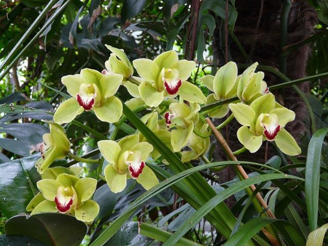 Откуда родом орхидея: страна происхождения, где они растут, в каких местах появился этот цветок, а также уход за ним и охрана