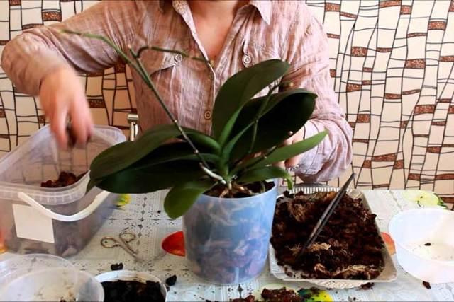 Белый налет на орхидее: что это такое, почему появляется, как бороться и лечить домашними средствами, то есть что делать, если листья растения покрылись им?