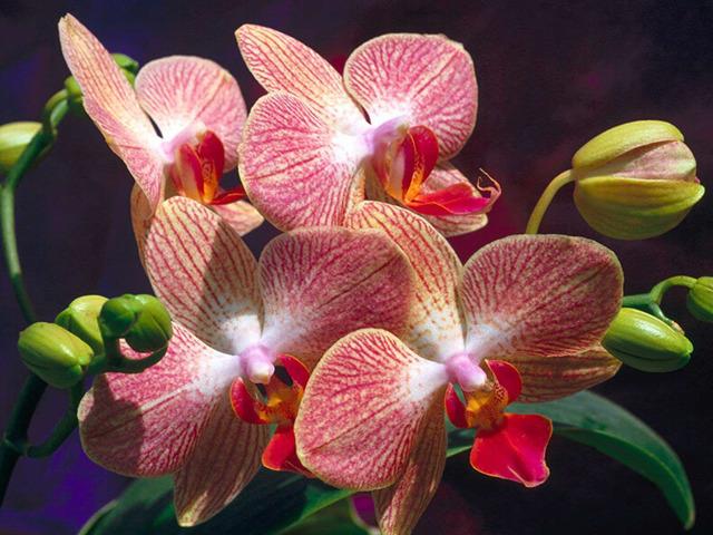 Цветы имбиря в домашних условиях: когда раскрываются бутоны и как долго радуют, почему могут не появиться, что нужно для выращивания, как стимулировать, а также фото