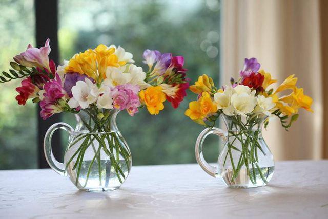 Герберы: их значение, красивые комнатные сорта, фото цветов, цена за штуку, сколько стоят после покупки, как растут, уход в домашних условиях, похожие растения