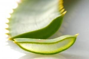 Как обрезать алоэ в домашних условиях: когда это нужно делать, какие взять листья для лечения, как правильно все провести для оздоровительных целей?