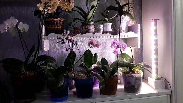 Лампа для орхидей: как организовать подсветку в домашних условиях, какие приборы нужны, как выбрать и установить led, люминесцентные и другие устройства?