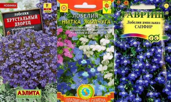 Лобелия на рассаду: когда сеять лучше всего и как правильно сажать семена, а также сроки их прорастания и правильный уход при выращивании