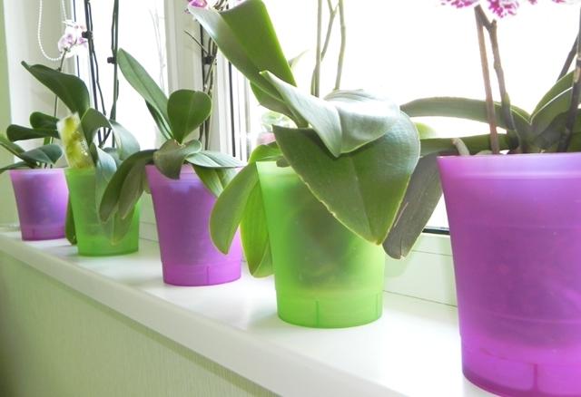 Горшок фаленопсиса: стеклянный, пластиковый, керамический и другие виды с фото и советами, как выбрать тот, который нужен и в какой можно сажать орхидею