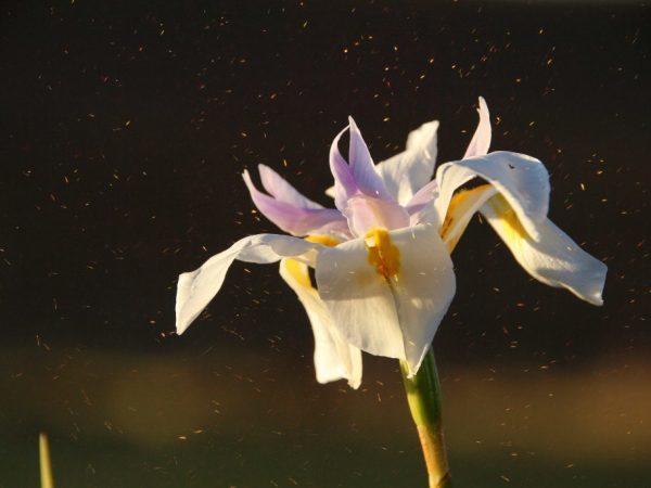 Аллергия на орхидею у детей