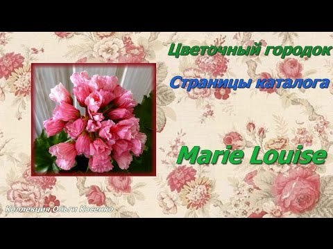 Герань тюльпановидная: фото растения и особенности ухода за ним в домашних условиях, а также рекомендации по размножению черенками и из семян