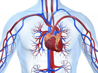Снижает ли имбирь сахар в крови: полезные свойства корня, его польза и вред при диабете 1 и 2 типа, а также можно ли или нет есть маринованный, как принимать?