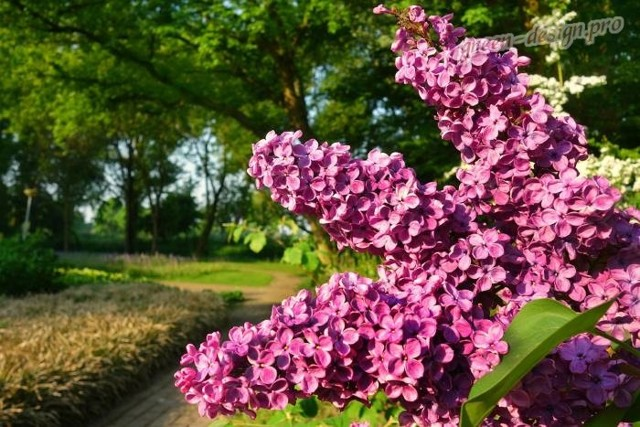 Оранжевые розы: фото и описание сортов растений данного цвета, таких как кустовой и других, правила размещения на садовом участке