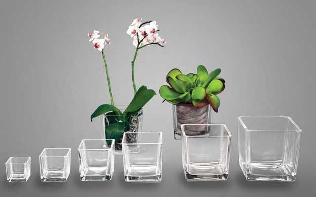 Орхидея: закрытая система посадки, принцип и инструкция этого способа выращивания, адаптация, а также как долго цветы могут расти при данной технике?