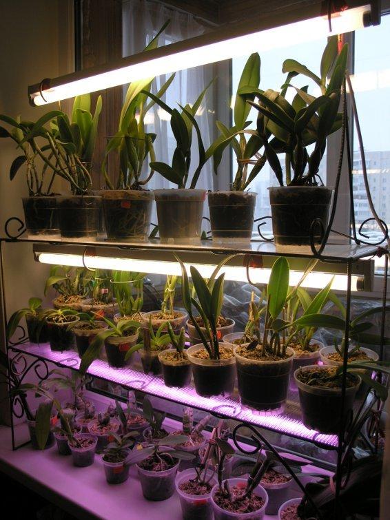 Как ухаживать за орхидеей в домашних условиях после покупки в горшке: что с ней нужно делать сразу после того, как принесли из магазина?
