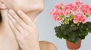 Комнатное растение антуриум хрустальный: описание и фото цветка, особенности ухода в домашних условиях и размножения, признаки наличия болезней и вредителей