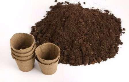 Грунт для Адениума: в какую землю нужно сажать и какой должен быть состав почвы, а также, как ее подготовить своими руками?