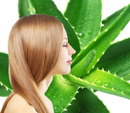 Алоэ для волос: применение в домашних условиях сока в чистом виде для их укрепления, рецепты для сухих, польза увлажняющего шампуня против перхоти для кожи головы