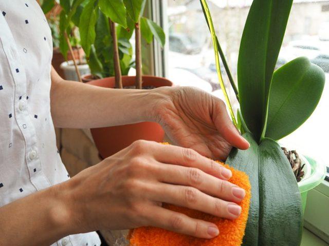 Как поливать орхидеи зимой и осенью: как часто осуществлять процедуру в домашних условиях, а также другие советы по уходу за цветком