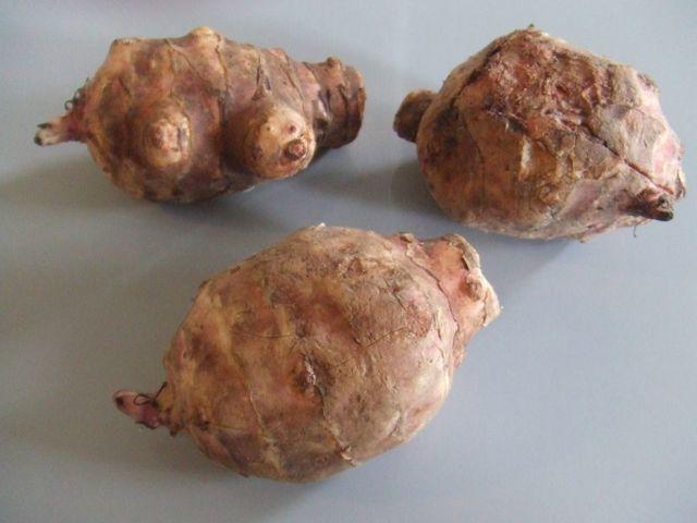 Топинамбур: что это такое, как выглядит на фото земляная груша, где найти в природе иерусалимский артишок и описание подсолнечника клубненосного, семейство растения