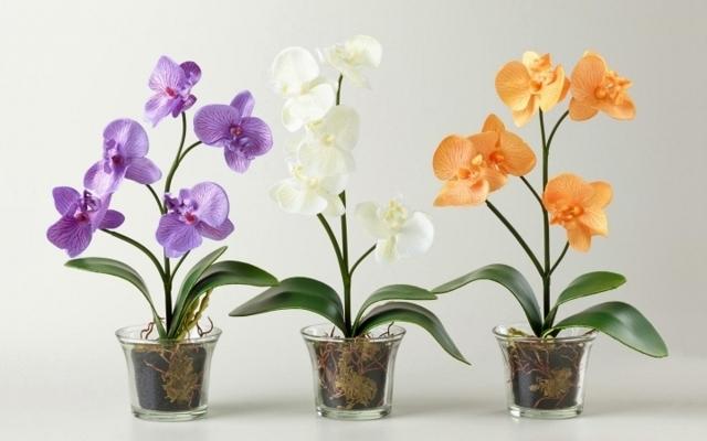 Когда пересаживать орхидею фаленопсис в домашних условиях: в какой момент можно проводить процедуру, надо ли это делать после покупки цветка и в каком лучше сезоне?
