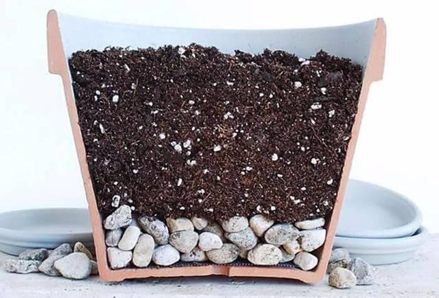 Гимнокалициум: как пересадить и рассадить отростки, какой грунт подобрать, как вырастить кактус посевом семян — подробные инструкции для каждого этапа