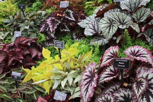 Бегония семена: фото того, как они выглядят, их цена, инструкция по размножению - как вырастить цветок в домашних условиях от посадки до ежедневного ухода