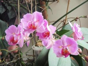 Можно ли обрезать листья у орхидеи: когда лучше это сделать и как правильно подстричь, а также в каких случаях нужно убирать их все?