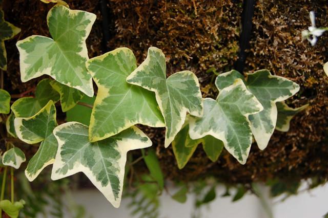 Орхидея ядовита или нет, а также вред или пользу несет для организма человека в доме и какие сорта подходят для выращивания в квартире?