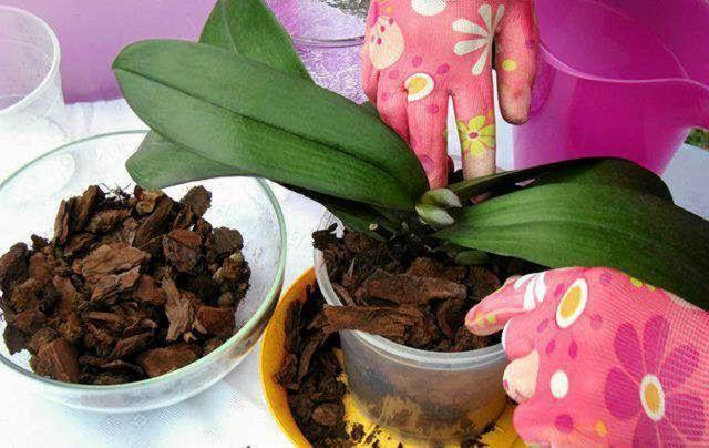 Блок для орхидеи своими руками: что это такое и каковы правила посадки и выращивания цветка?