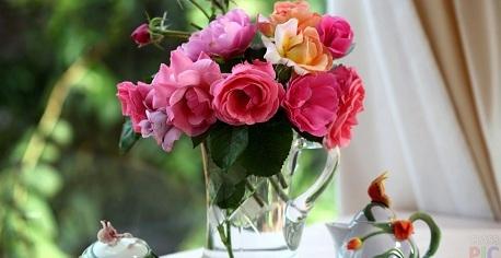 Пинк флойд сорт розы