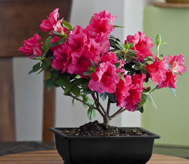 Герань: как выглядит домашнее лечебное растение, растущее на окне, описание и фото цветка, почему второе его название - журавельник?