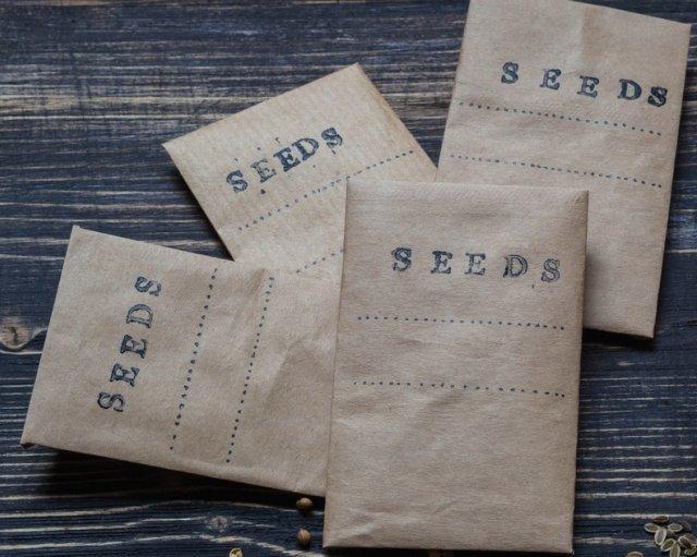 Как собрать семена петунии в домашних условиях самостоятельно и правильно: когда это нужно делать, как выглядит пошагово на фото процесс?