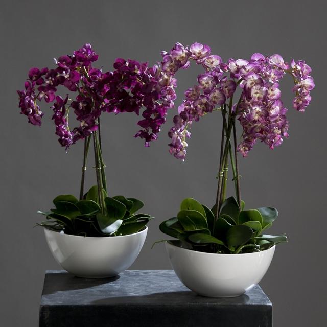 Корона горшок для орхидеи: как правильно подобрать кашпо, его плюсы и чем оно плохо