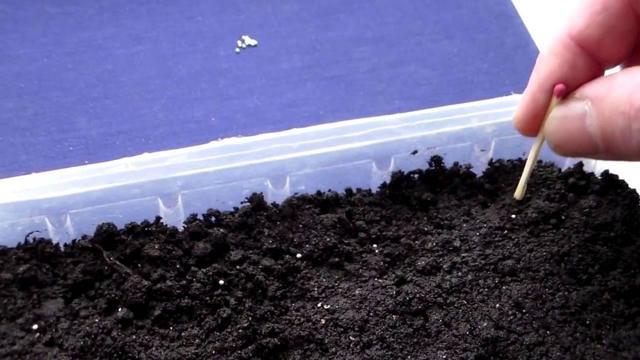 Петуния в кашпо: какие сорта ампельного растения лучше выбрать для дома и сада, сколько штук можно сажать в один подвесной горшок, а также фото видов и уход