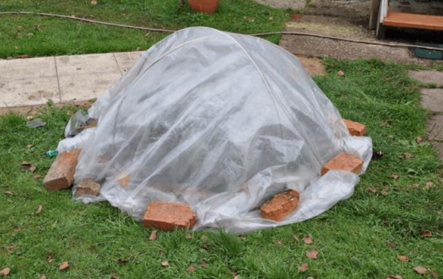 Как укрыть на зиму рододендрон садовый: когда это делается осенью, при какой температуре и как нужно правильно сооружать