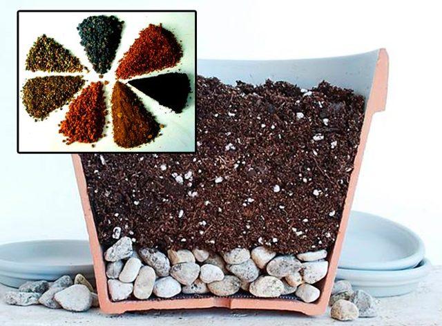 Литопсы из семян в домашних условиях: как и когда происходит размножение таким способом, подготовка перед посадкой, посев и выращивание «живых камней», фото растения