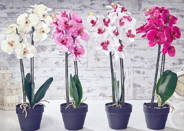 Как отделить детку орхидеи от материнского растения: когда и как правильно отсоединить прикорневой отросток из пазухи листа или у основания ствола?