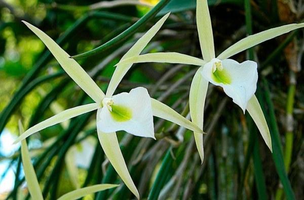 Орхидея: характеристика и описание, научное латинское и другие названия, фото комнатного цветка, содержание растения в домашних условиях для начинающих